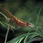 Chameleon catching prey 800x600