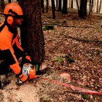 Stihl's 2-in-1 Laser projector makes tree felling a breeze