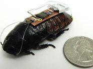 cyborg roach