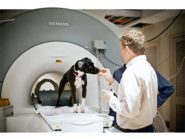 Callie wears earmuffs to protect her hearing during the fMRI. Image credit: Emory Photo/Video