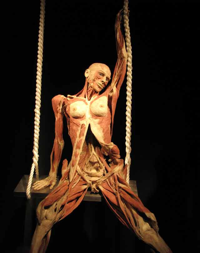 external image Body-Worlds-8.jpg