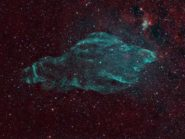 w50 The Manatee Nebula