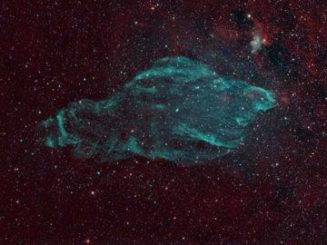 w50 The Manatee Nebula