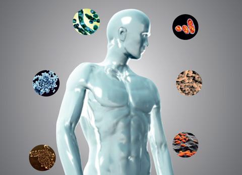 human microbiome illustration