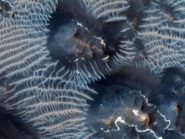 two-types-of-windblown-sediments-on-Mars