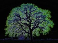 Glowing-tree