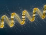 Marine-diatom-Wim-van-Egmond