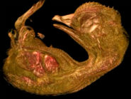 quail-embryo-small-world-in-motion