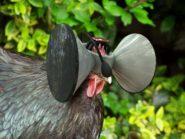 chicken_vr