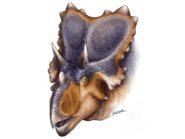 Mercuriceratops-gemini-horned-dinosaur