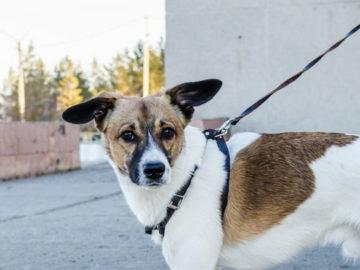 dog-on-a-leash