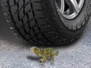 Bridgestone's roadkill project is heading south.
