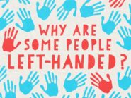 Why some people are left-handed