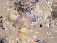 microbeads found in aquatic habitats