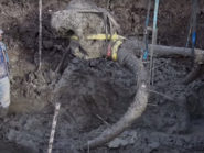 Mammoth discovery in the USA has signs of human activity