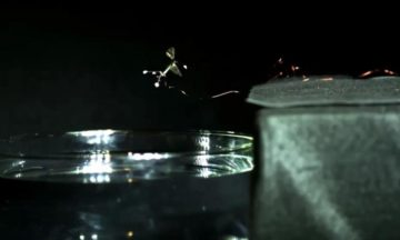 Harvard's RoboBees can hover, dive and swim