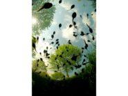 Tadpoles overhead
