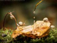 Snails in autumn: Alberto Ghizzi Panizza