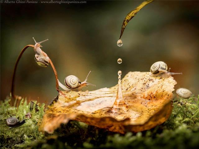 Alberto-Ghizzi-Panizza-snails