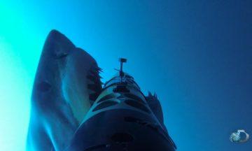 REMUS SharkCam gets bitten