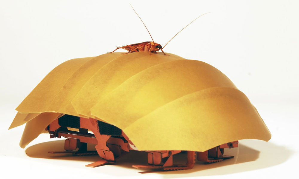 Cockroaches inspire search-and-rescue robots