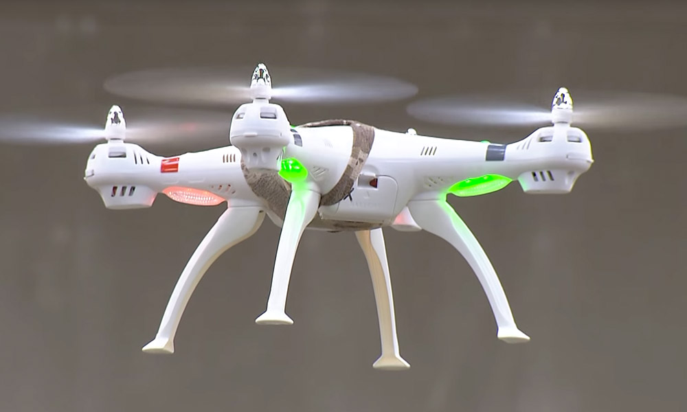 Dutch police train eagles to hunt drones