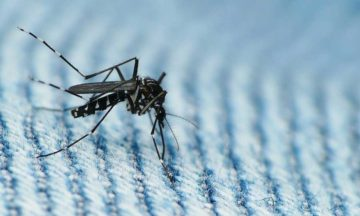 Speaking Zika with the man who discovered Ebola