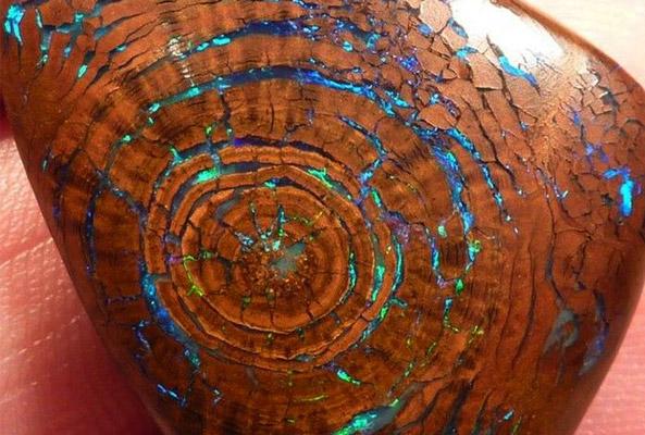 opal in petrified wood