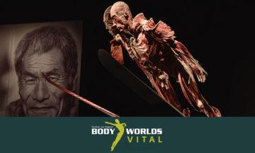 BODY WORLDS Vital exhibition