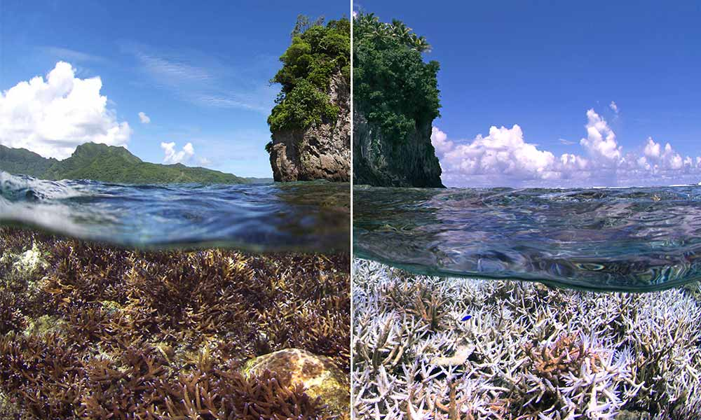Coral bleaching American Samoa, XL Catlin Seaview Survey