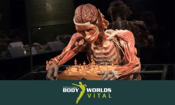 BODY WORLDS Vital exhibition at the V&A Waterfront in Cape Town