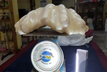 World's biggest natural giant pearl