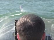 Dolphins surf USS Newport News submarine's wave