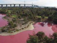 Westgate Park lake turned pink