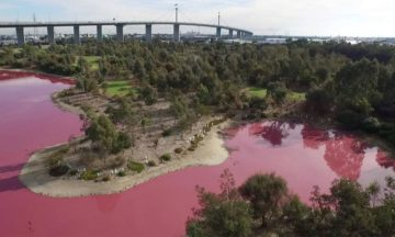Westgate Park lake turned pink