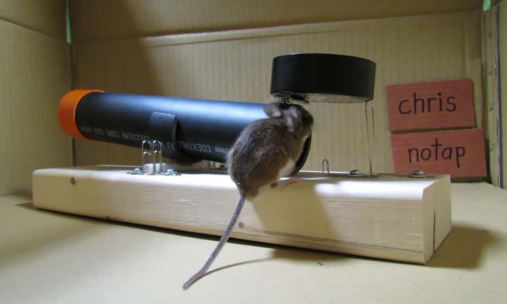 Make a non-lethal mousetrap by Chris Notap