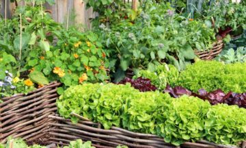 11 companion planting combos to help your garden thrive