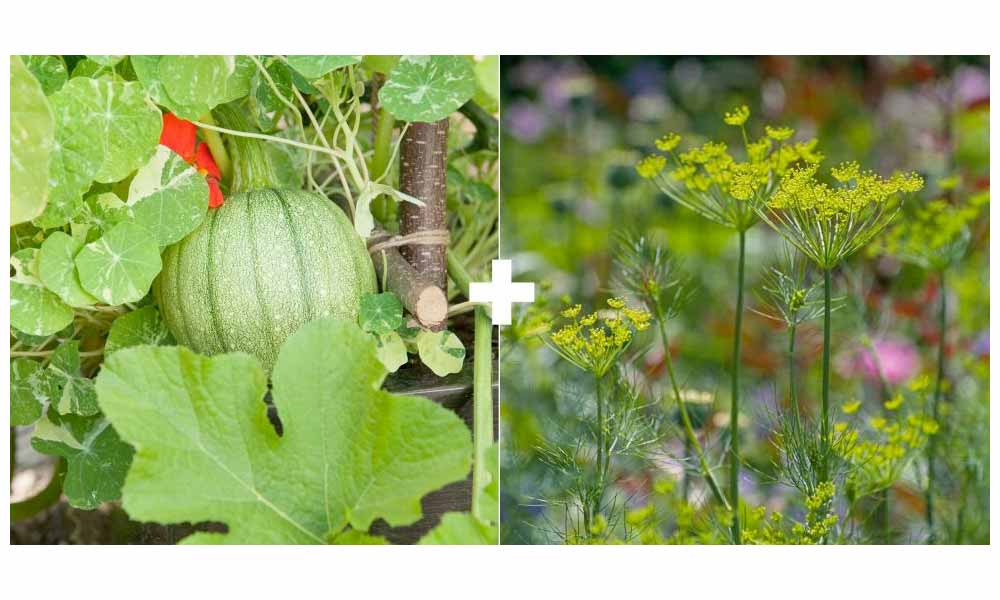 Melons or Squash + Flowering Herbs