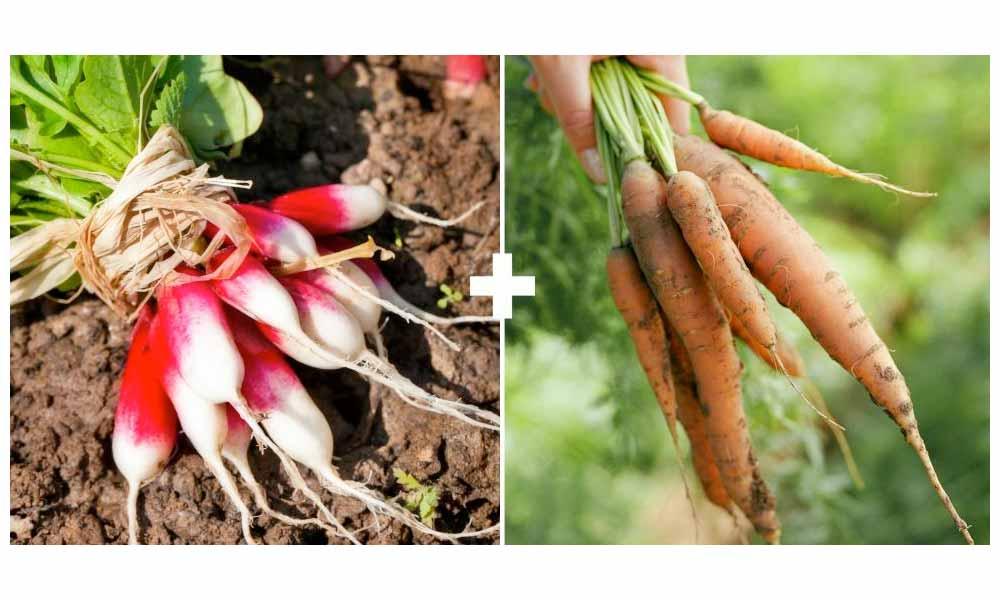 Radishes + Carrots