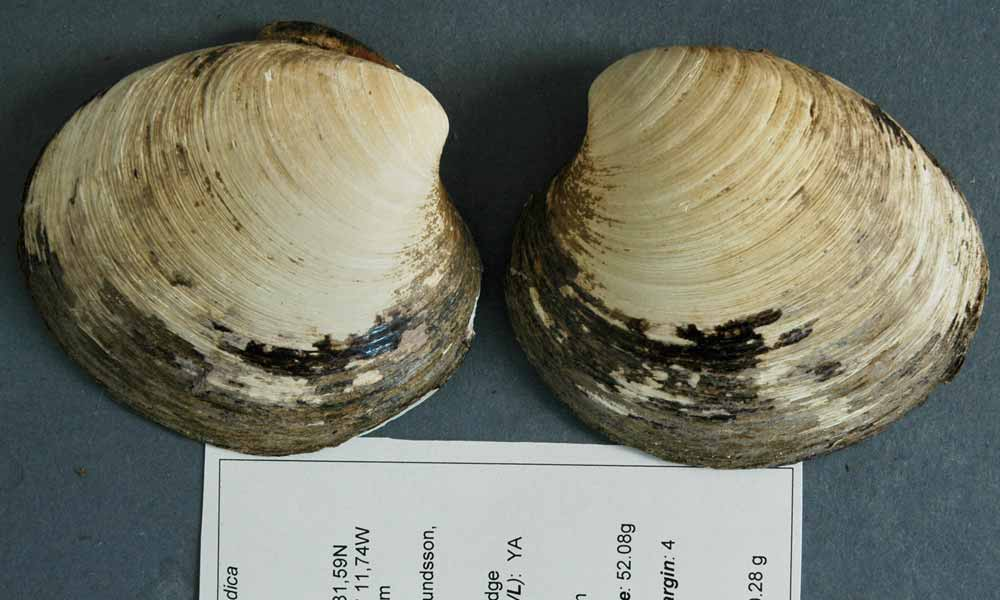 Ming the clam - the oldest living thing on Earth?