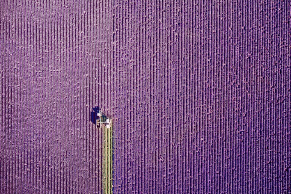 International Drone Photography contest lavender fields in Provence